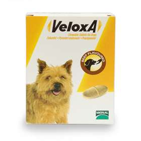 Veloxa Chewable Worm Treatment Tablets For Dogs Beef Flavoured x 2